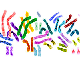 colored chromosomes